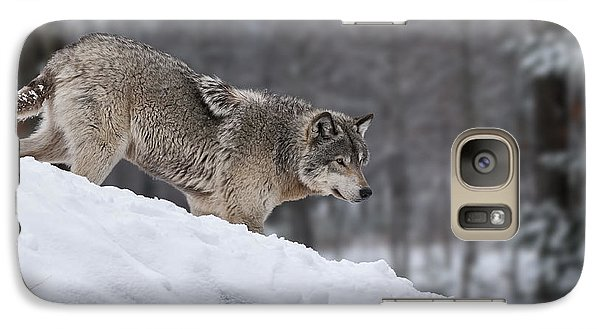 Galaxy Case featuring the photograph Timber Wolf On Hill by Wolves Only