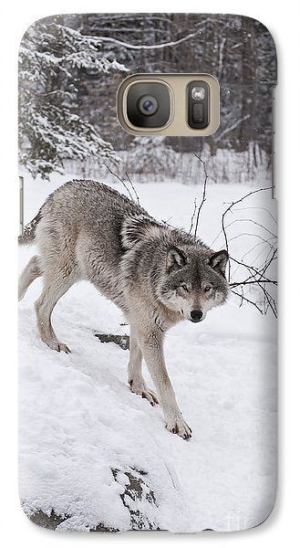 Galaxy Case featuring the photograph Timber Wolf  by Wolves Only