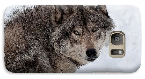 Galaxy Case featuring the photograph Timberwolf At Rest by Bianca Nadeau