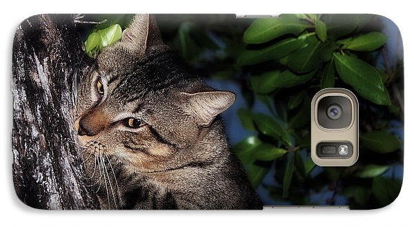 Galaxy Case featuring the photograph Tree Hugging Cat by Marjorie Imbeau