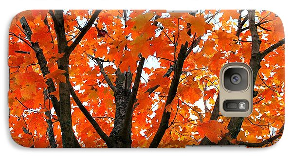 Galaxy Case featuring the photograph Tree Transition by Candice Trimble