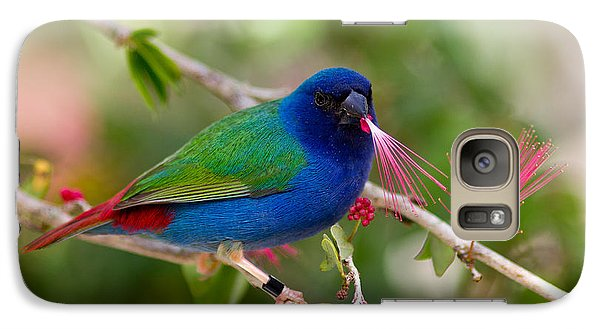 Galaxy Case featuring the photograph Tricolor Parrot Finch by Les Palenik