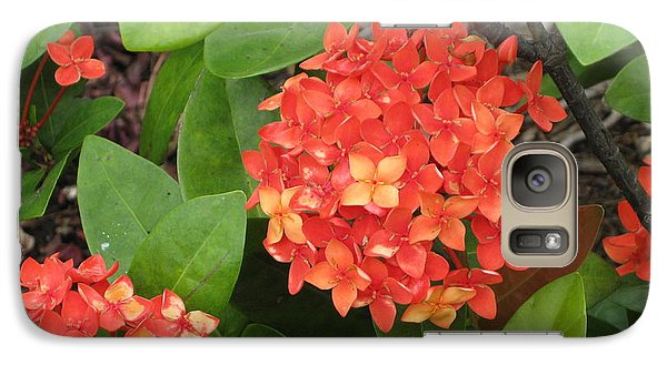 Galaxy Case featuring the photograph Tropical Orange Flower by Judy Palkimas