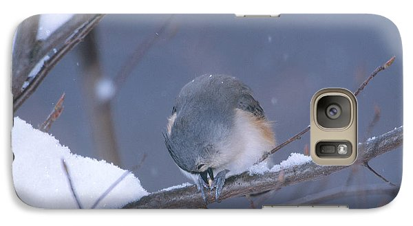 Tufted Titmouse Eating Seeds Galaxy S7 Case by Paul J. Fusco