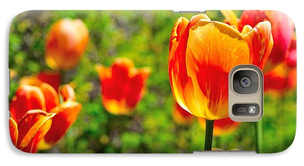Galaxy Case featuring the photograph Tulips by Joe  Ng