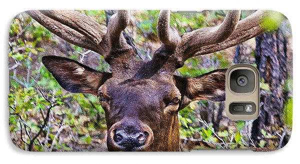 Galaxy Case featuring the photograph Up Close And Personal With An Elk by Bob and Nadine Johnston