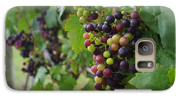 Galaxy Case featuring the photograph Vineyard Colors by Greg Graham