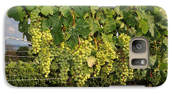 Galaxy Case featuring the photograph Green Grapes In Traverse City Michigan by Diane Lent