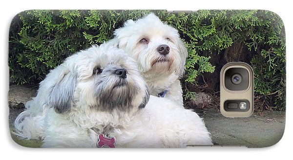Galaxy Case featuring the photograph Havanese Dog Sisters by Laurie Tsemak