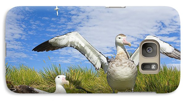 Wandering Albatross Courting  Galaxy S7 Case