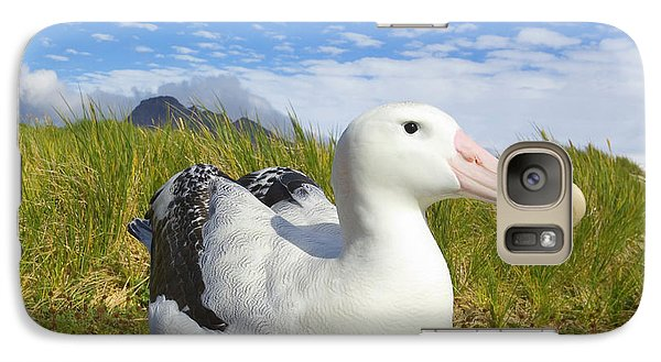 Wandering Albatross Incubating  Galaxy S7 Case
