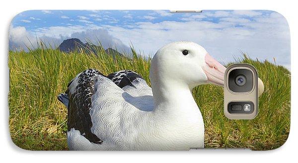Wandering Albatross Incubating  Galaxy S7 Case by Yva Momatiuk John Eastcott