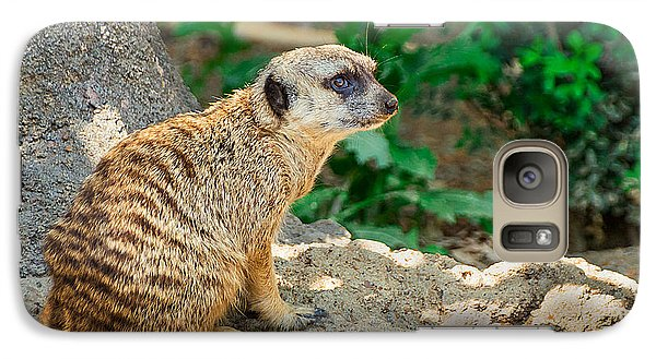 Watchful Meerkat Galaxy S7 Case by Jon Woodhams