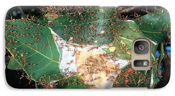 Weaver Ants Galaxy S7 Case by Gregory G. Dimijian, M.D.