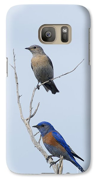 Western Bluebird Pair Galaxy Case by Mike  Dawson