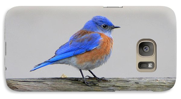 Galaxy Case featuring the photograph Western Bluebird Perching by Bob and Jan Shriner