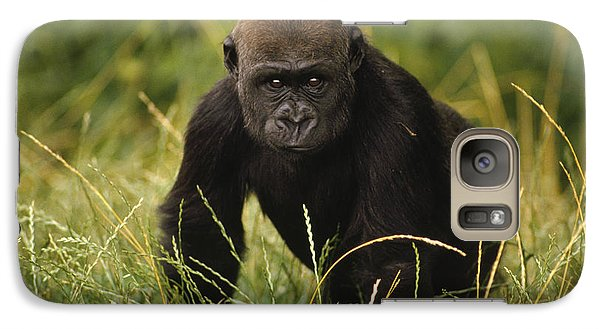Western Lowland Gorilla Juvenile Galaxy S7 Case by Gerry Ellis