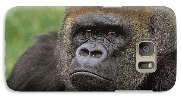 Western Lowland Gorilla Silverback Galaxy S7 Case by Gerry Ellis