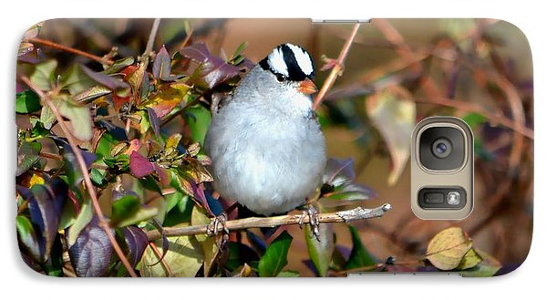 Galaxy Case featuring the photograph White Crowned Sparrow by Deena Stoddard