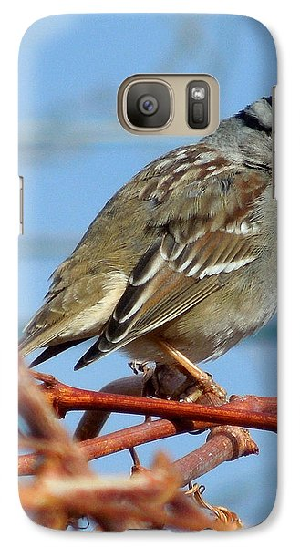 Galaxy Case featuring the photograph White Crowned Sparrow by Heidi Manly