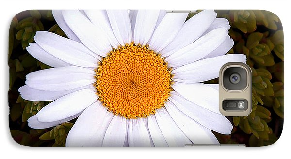 Galaxy Case featuring the photograph White Daisy In Bloom by Gary Slawsky
