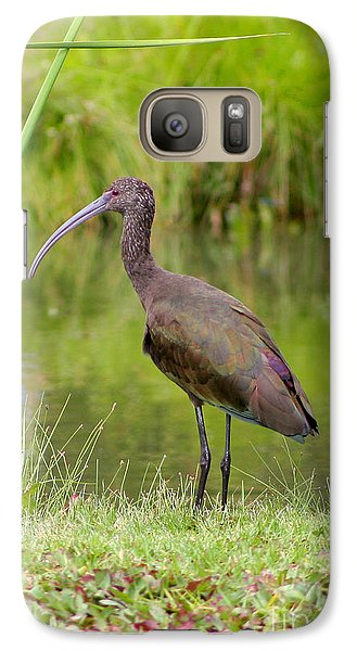 Galaxy Case featuring the photograph White-faced Ibis 2 by Bob and Jan Shriner