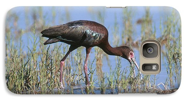 White-faced Ibis Galaxy S7 Case by Anthony Mercieca