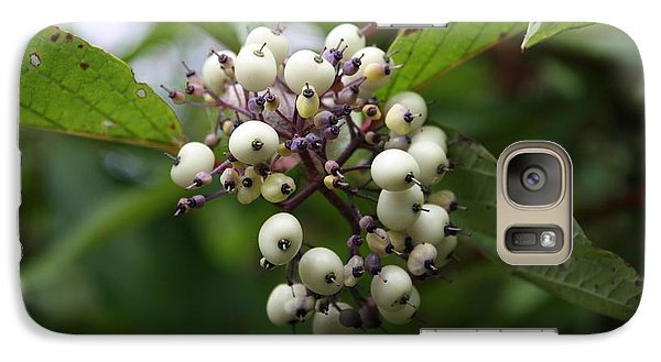 Galaxy Case featuring the photograph White Mountain Berries by Amanda Holmes Tzafrir