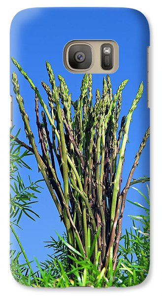 Wild Asparagus (asparagus Acutifolius Galaxy S7 Case by Nico Tondini