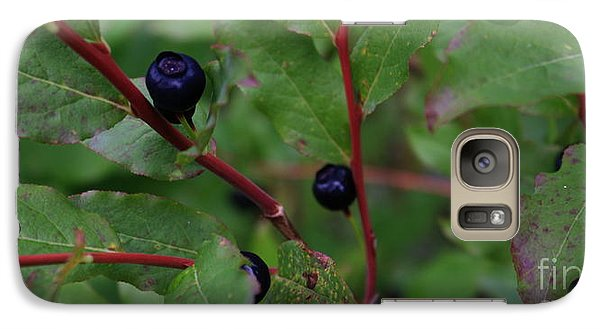 Galaxy Case featuring the photograph Wild Blueberries by Amanda Holmes Tzafrir