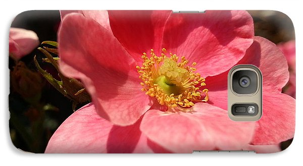 Galaxy Case featuring the photograph Wild Rose by Caryl J Bohn