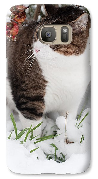 Galaxy Case featuring the photograph Winter Cat by Laura Melis