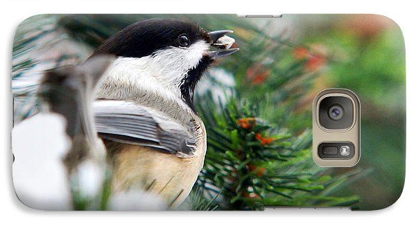 Winter Chickadee With Seed Galaxy Case by Christina Rollo