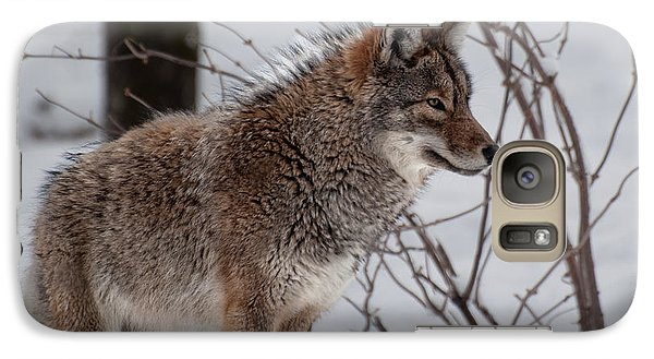 Galaxy Case featuring the photograph Winter Coyote by Bianca Nadeau