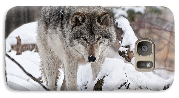 Galaxy Case featuring the photograph Winter Timber Wolf by Wolves Only
