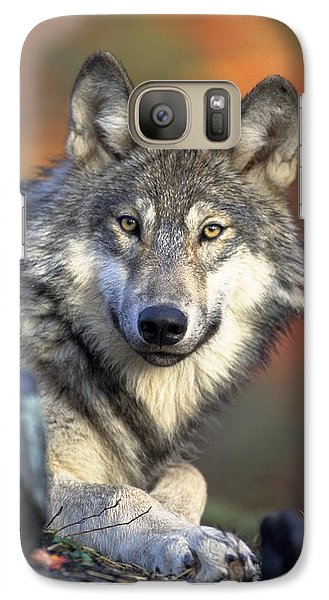 Galaxy Case featuring the photograph Wolf Predator Canidae Canis Lupus Hunter by Paul Fearn