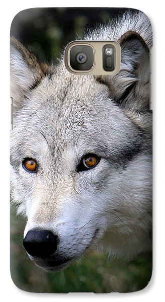 Galaxy Case featuring the photograph Wolf Stare by Steve McKinzie