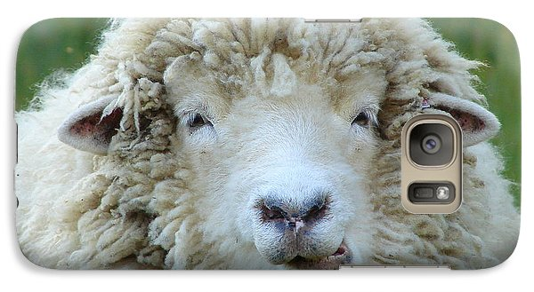 Galaxy Case featuring the photograph Wooly Sheep by Ramona Johnston