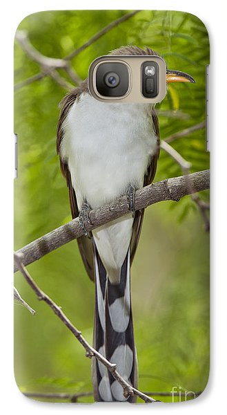 Yellow-billed Cuckoo Galaxy S7 Case by Anthony Mercieca