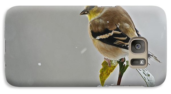 Galaxy Case featuring the photograph Yellow Finch by Denise Romano