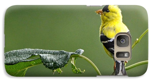 Galaxy Case featuring the photograph Yellow Finch by Nava Thompson