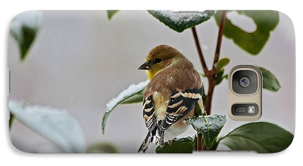 Galaxy Case featuring the photograph Yellow Finch On Branch by Denise Romano