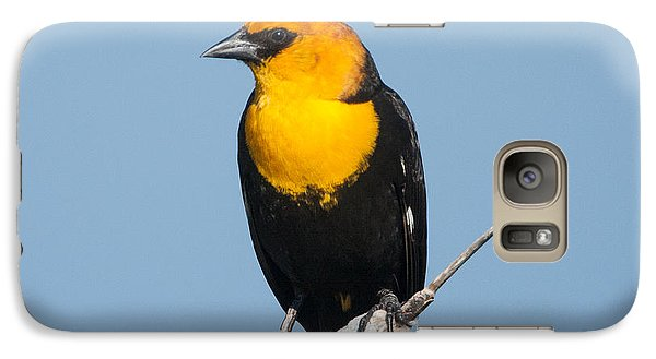 Galaxy Case featuring the photograph Yellow Headed Blackbird by Jack Bell