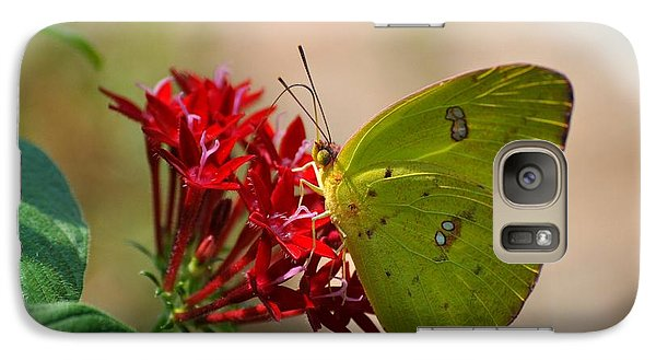 Galaxy Case featuring the photograph Yellow Moth by Kelly Nowak