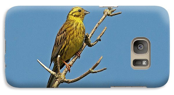 Galaxy Case featuring the photograph Yellowhammer by Paul Scoullar