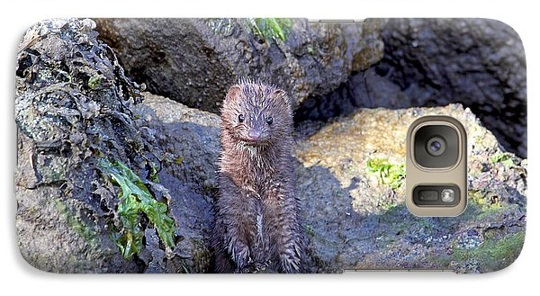 Galaxy Case featuring the photograph Young American Mink by Peggy Collins
