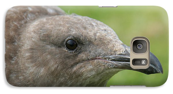 Galaxy Case featuring the photograph Young Seagull by Bob and Jan Shriner
