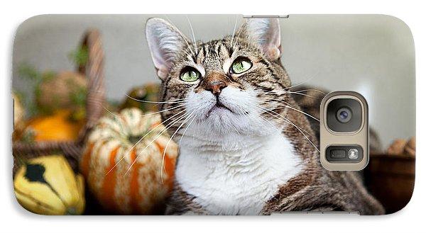 Pumpkin Galaxy S7 Case - Cat And Pumpkins by Nailia Schwarz