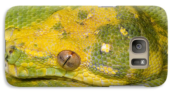 Green Tree Python Galaxy Case by Dante Fenolio
