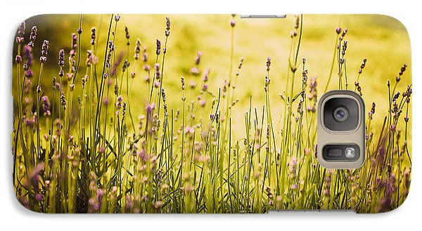 Galaxy Case featuring the photograph Lavender Gold by Sara Frank